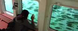 大型連休、家族揃って水族館