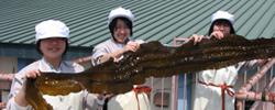 魚食を未来に/水産高校生の柔軟な発想