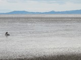 広大な干潟が広がる有明海。干潟の向こうがノリ養殖場(佐賀市内干潟よか公園から)