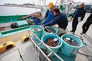 相馬魚市場で行われた沖合底びき船による試験操業(2月下旬撮影)