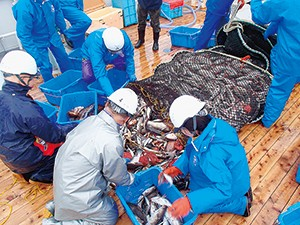 漁業調査指導船・いわき丸による、モニタリング検体の漁獲の模様(福島水試提供)