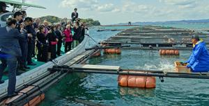 白浜実験場の網イケス施設を見学する関西駐在の外交官たち