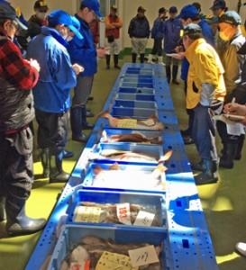 小名浜魚市場A棟の入札。入札制度が復し想定していた運用が始まった(福島県魚連提供)