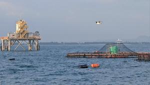境港沖に設置したプラットホーム(左)と実証試験イケス