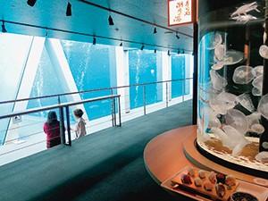 大水槽の魚を見ながら寿司を食べる