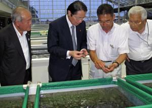 宮古市の「あわび種苗センター」を視察する衛藤議連会長(左から2人目)と鈴木副会長(左)