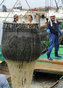 マイワシの好水揚げが続き活況の飯岡漁港