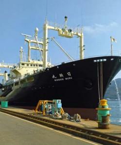 調査を終えて仙台港に入港した日新丸