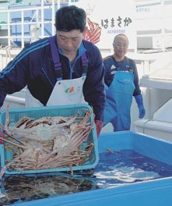 兵庫・浜坂漁港での水揚げ