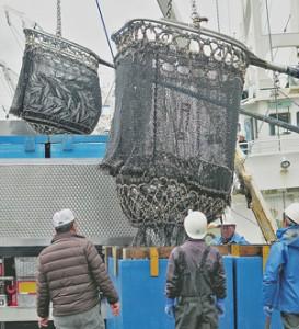 入港隻数の増加で数量を増やす 銚子サバ