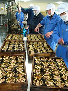 アイゴの缶詰作りに取り組む生徒たち