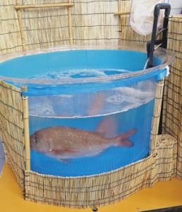 レンタルで提供する「店舗用水槽魚樽ふいっしゅ」
