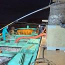20日早朝の七尾・庵漁港の水揚げの様子。台船の魚槽をマイワシが満たす