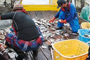 揚がった魚を甲板で選別する底びき網漁業者