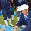 初入札を前にカキの品質を検査するJFみやぎ職員