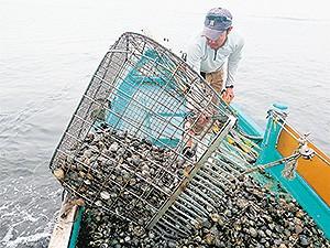 鋤簾を使い水深3~4メートルの海底をかいて獲る