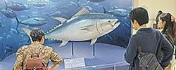豊洲市場の魚食発信