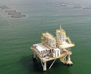 境港沖合に建設し拡張工事を完了したプラットホームと養殖イケス