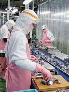 サバ缶詰の生産に追われるハチカンの工場