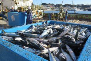 新MEL認証取得しているマサバのまき網漁業