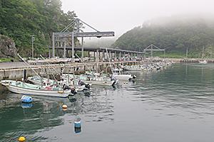 霧に煙る重茂漁港。港湾内の海水の透明度は高い